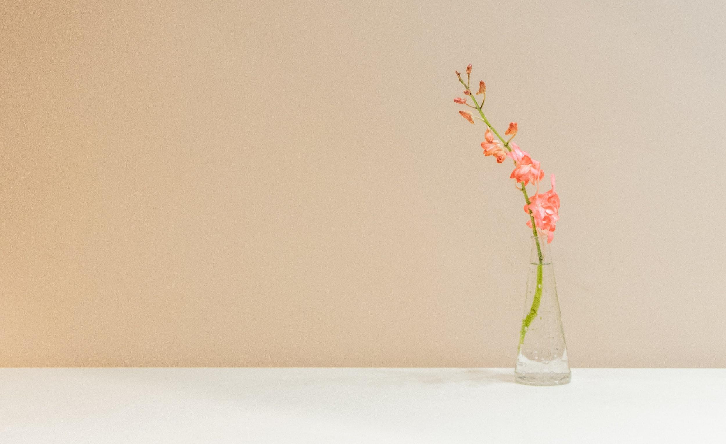 Cutting Through Indecision & Overthinking - zen habits